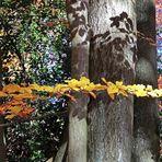 Ein goldener Zweig