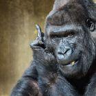 Ein Gorilla der mir gezeigt hat was er von Fotografen hält ;-)