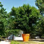 Ein großer Baum in einem Blumentopf