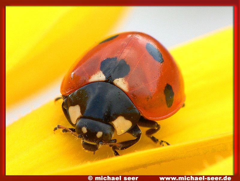 ein großer kleiner käfer :)))