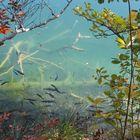 ein großes Aquarium