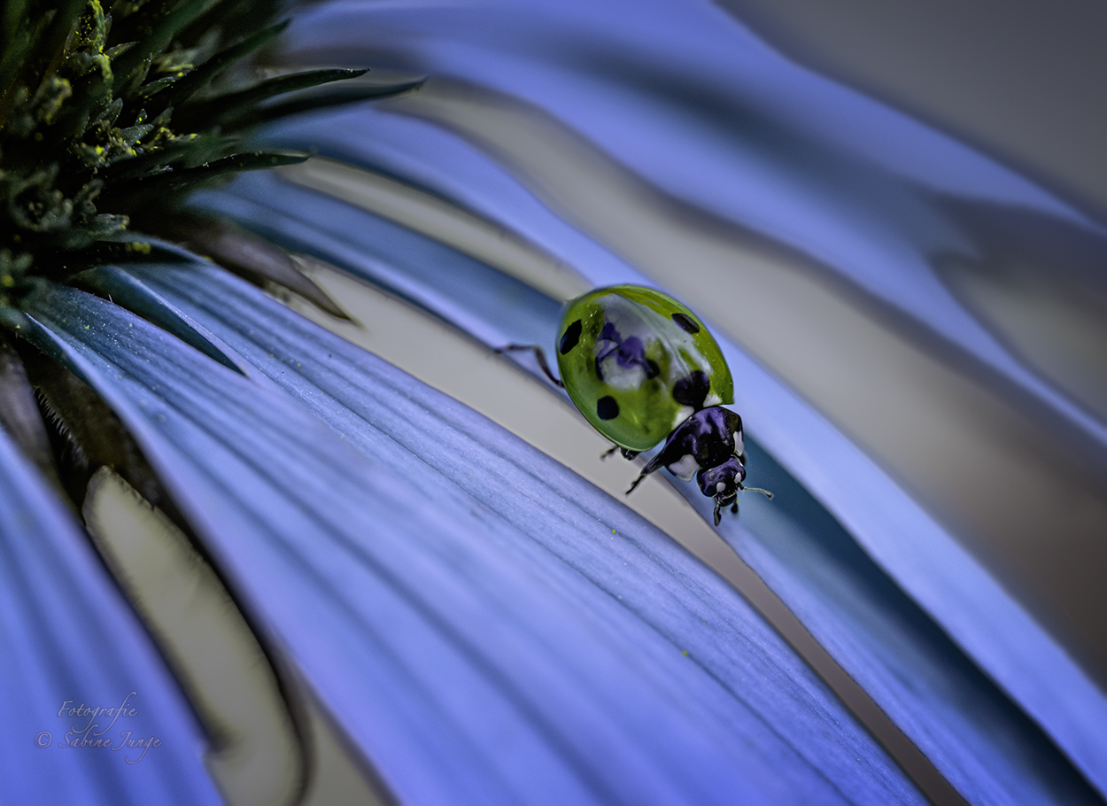 Ein grüner Käfer