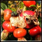 ...ein grüner Käfer genießt die letzten Sommersonnenstrahlen