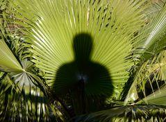 Ein grüner Mann im Sonnenlicht
