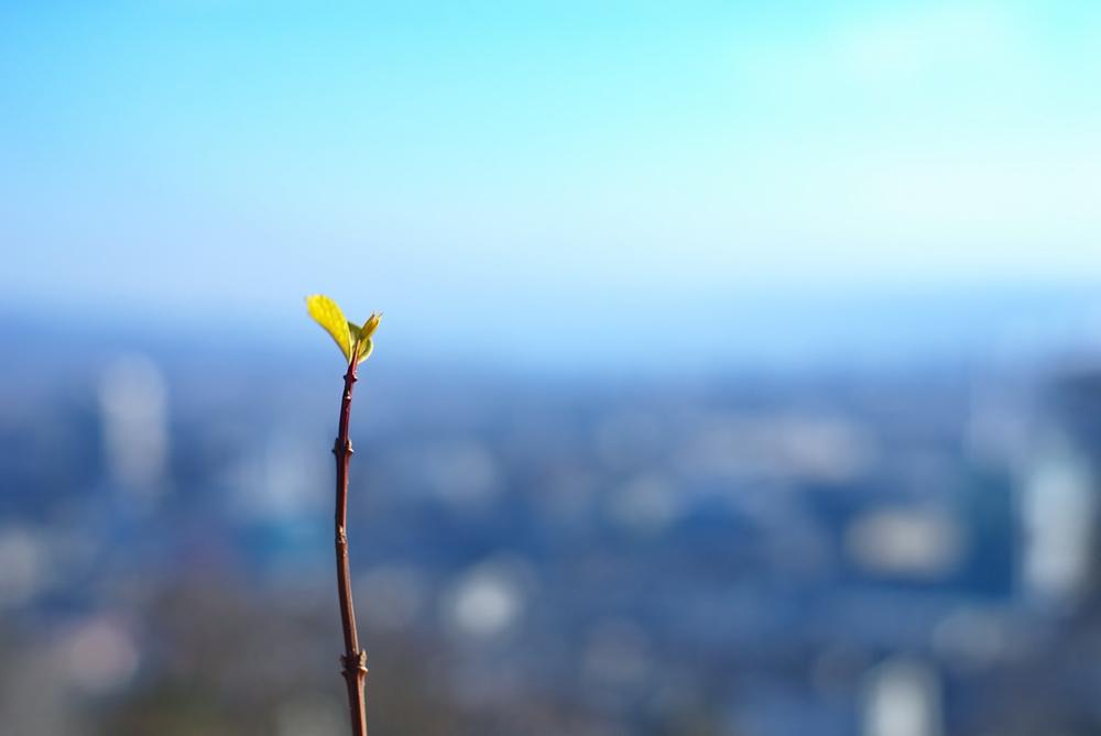 Ein grünes Blatt macht noch keinen Frühling, aber es lässt hoffen...