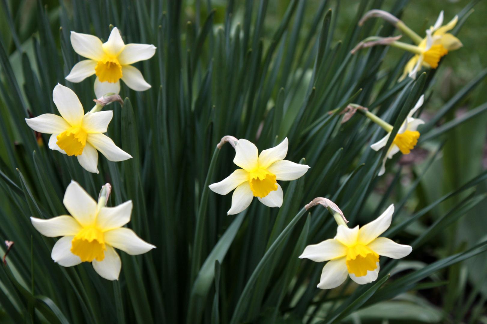 ein Gruß an den Frühling