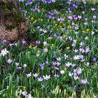 Ein Gruß des Frühlings