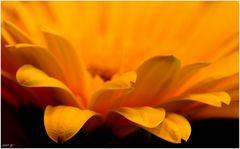 ein Gruß in orangegelb
