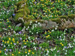 Ein Gruß vom Frühling