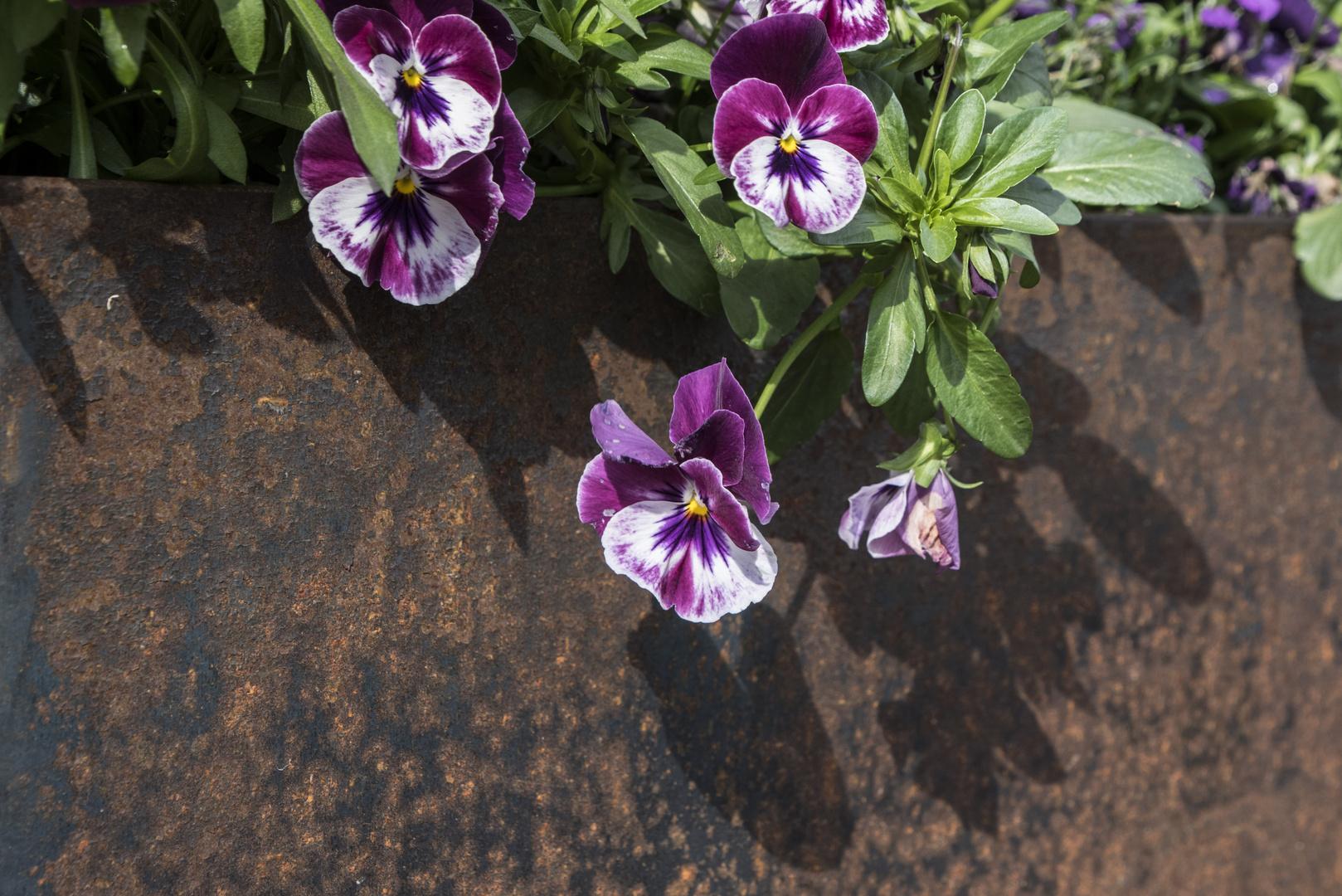 ein Gruss von der Buga - Mittwochsblümchen auf Rost