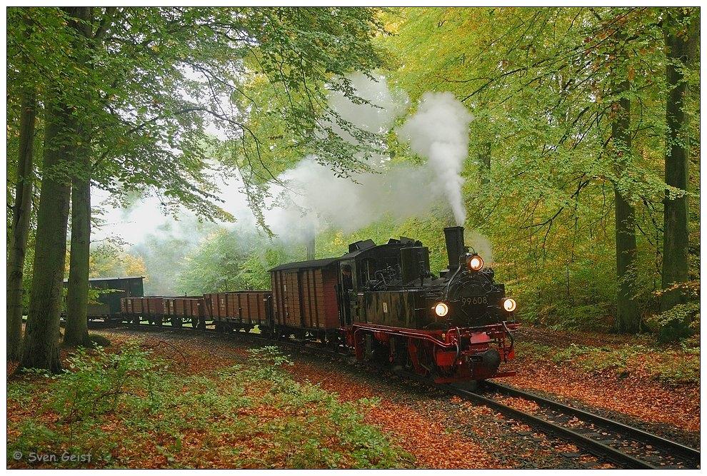 Ein Güterzug in der herbstlichen Granitz