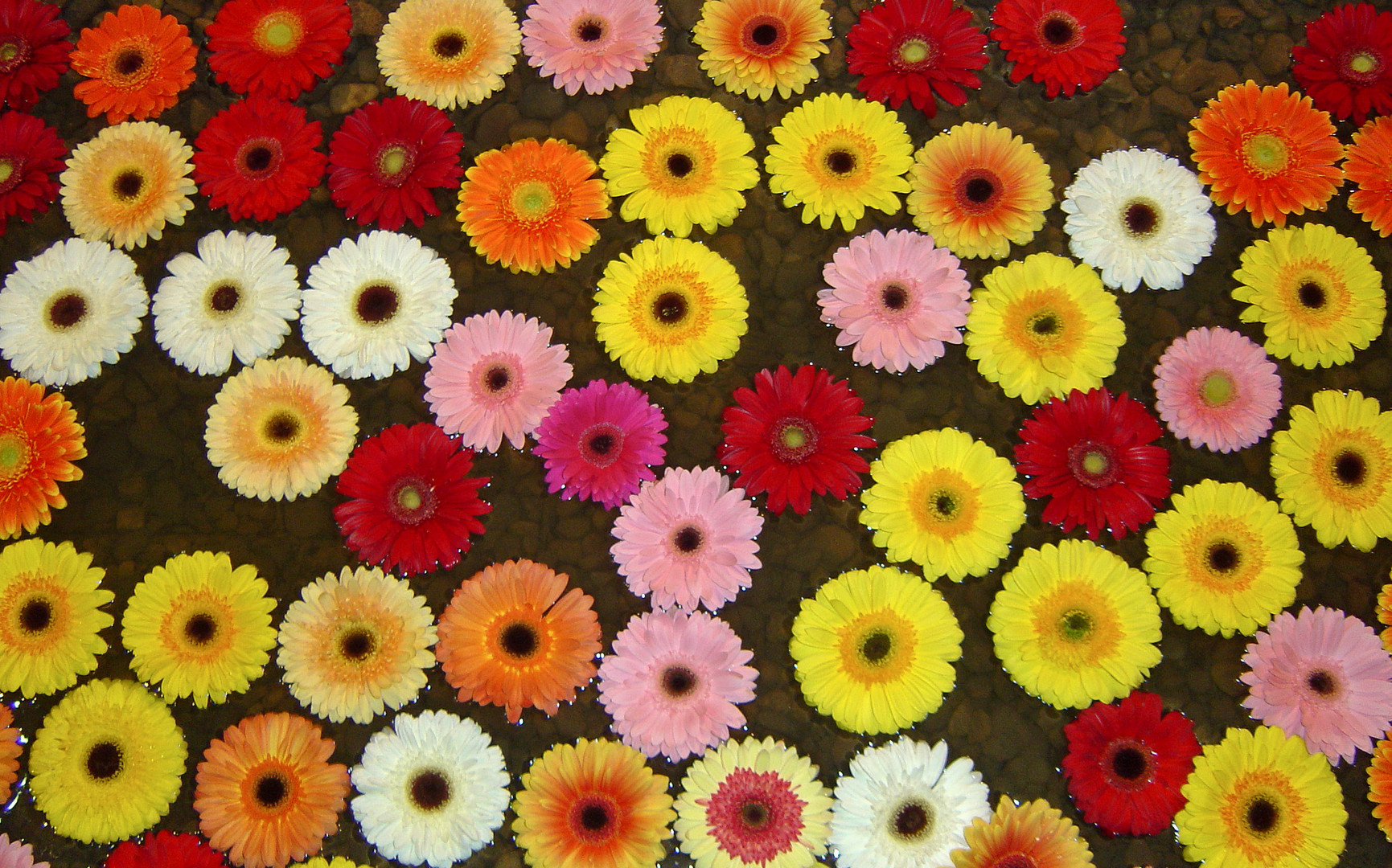 ein gute laune bild foto bild pflanzen pilze flechten bl ten kleinpflanzen. Black Bedroom Furniture Sets. Home Design Ideas
