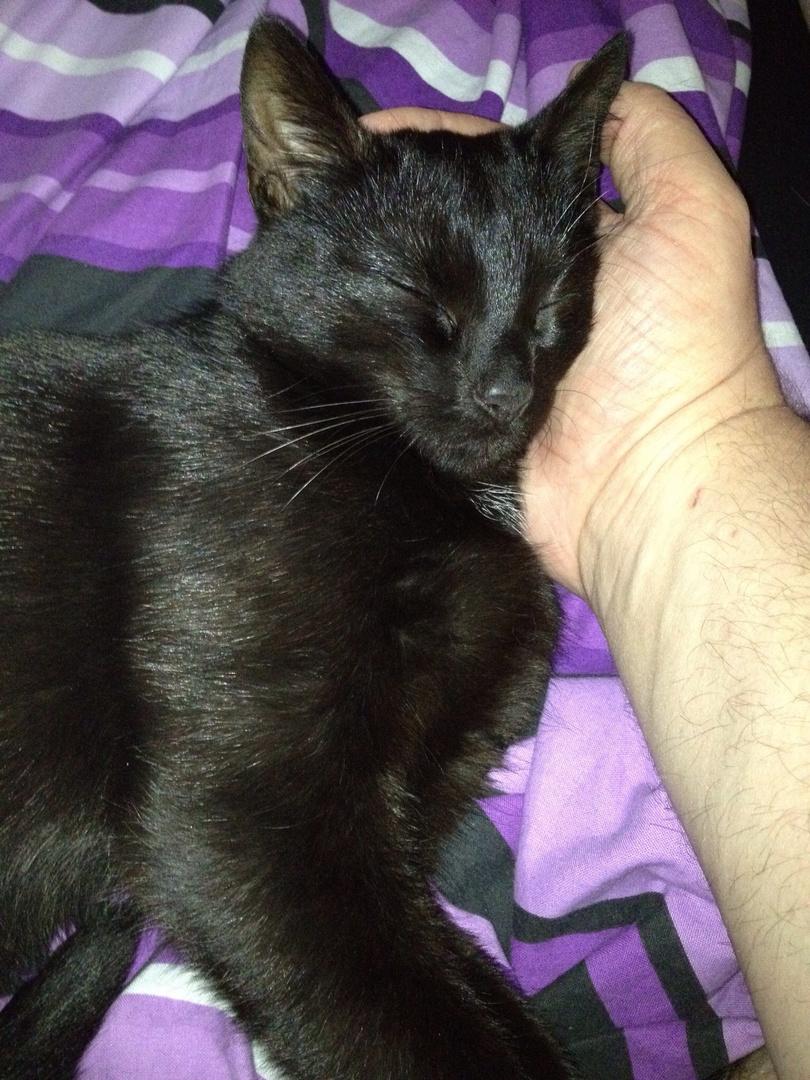 Ein Händchen für Katzen...