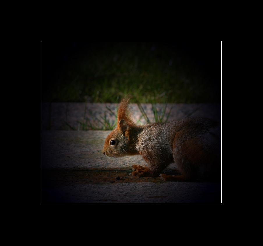 ein halbes Hörnchen