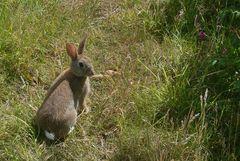 Ein Hase saß im tiefen Gras ...