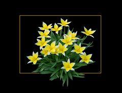 Ein Hauch vom Frühling # Un conato de primavera