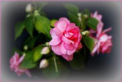 Ein hauch von Blüte