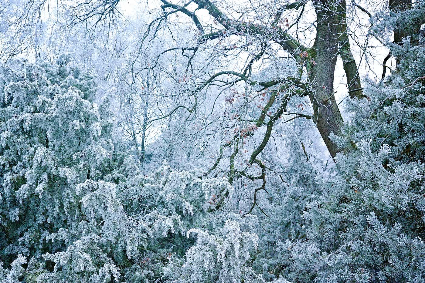 Ein Hauch von Frost