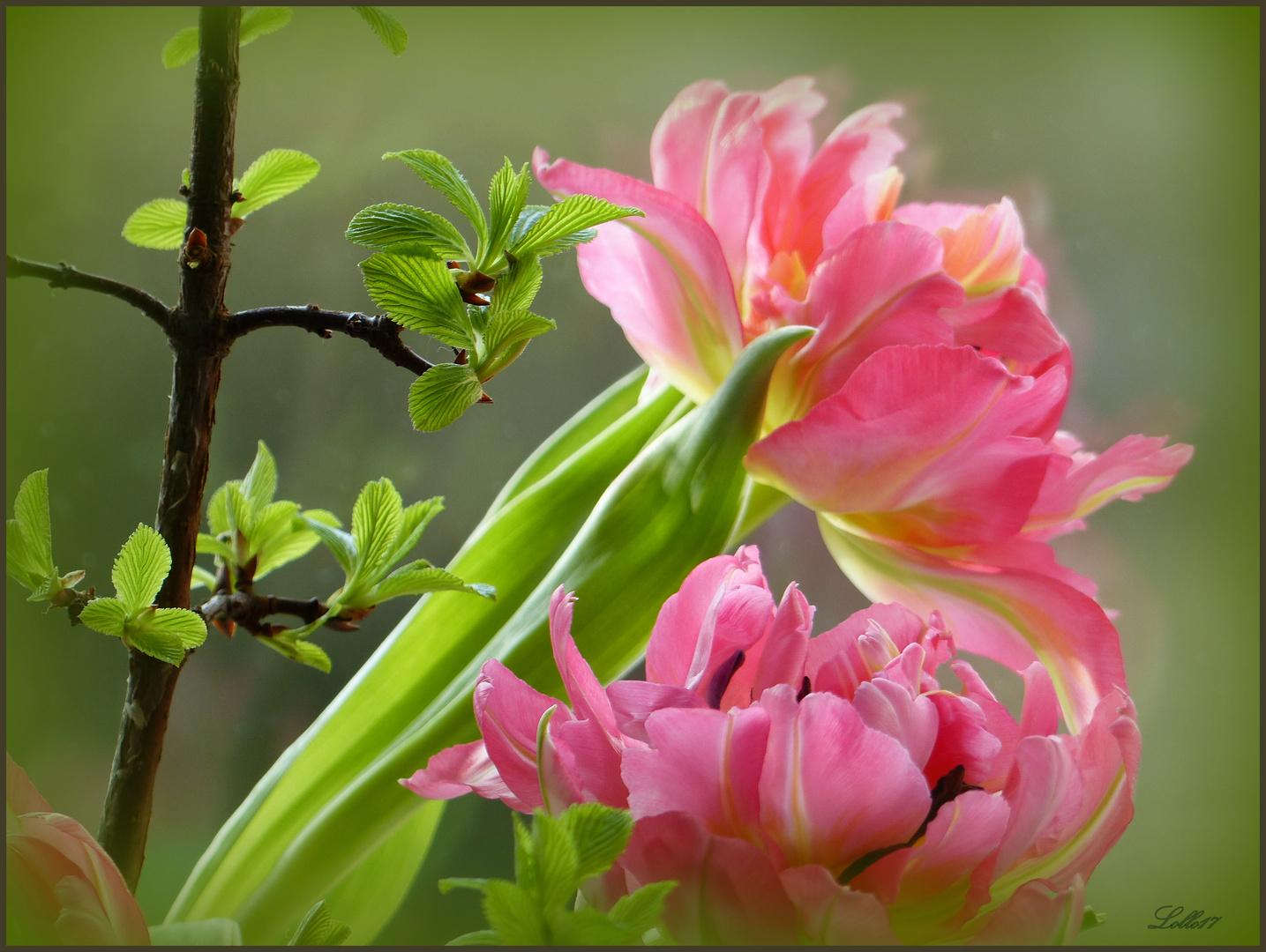 Ein Hauch von Frühling ... Foto & Bild | pflanzen, tulpen frühling ...