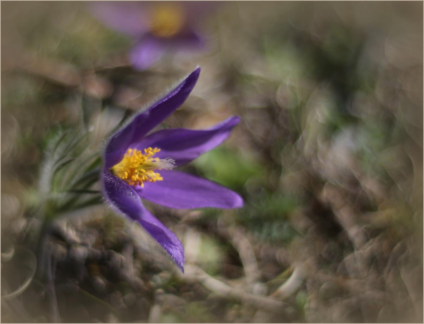 Ein Hauch von Frühling (I)...