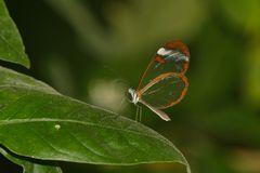 ein Hauch von Schmetterling