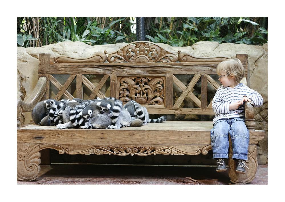 Ein Haufen und ein Katta