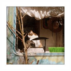 Ein Heim für Kunst und Katze