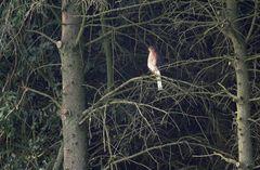 Ein heller Fleck am Waldesrand