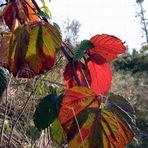 Ein Herbstgedicht!
