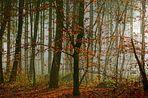 Ein herbstlicher Morgen im Wald