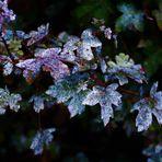 ein Herbststilleben