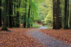 Ein Herbsttag im Jasmunder Wald