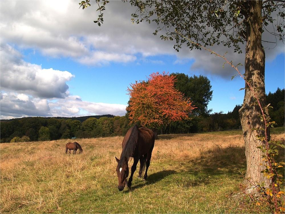 Ein Herbsttag im Taunus