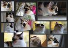 Ein Herbsttag mit Lulu