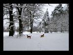 **Ein herrlicher Wintertag**