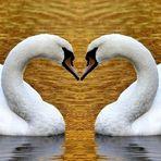 Ein Herz aus Gold...