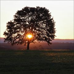 * Ein Herz für Bäume *