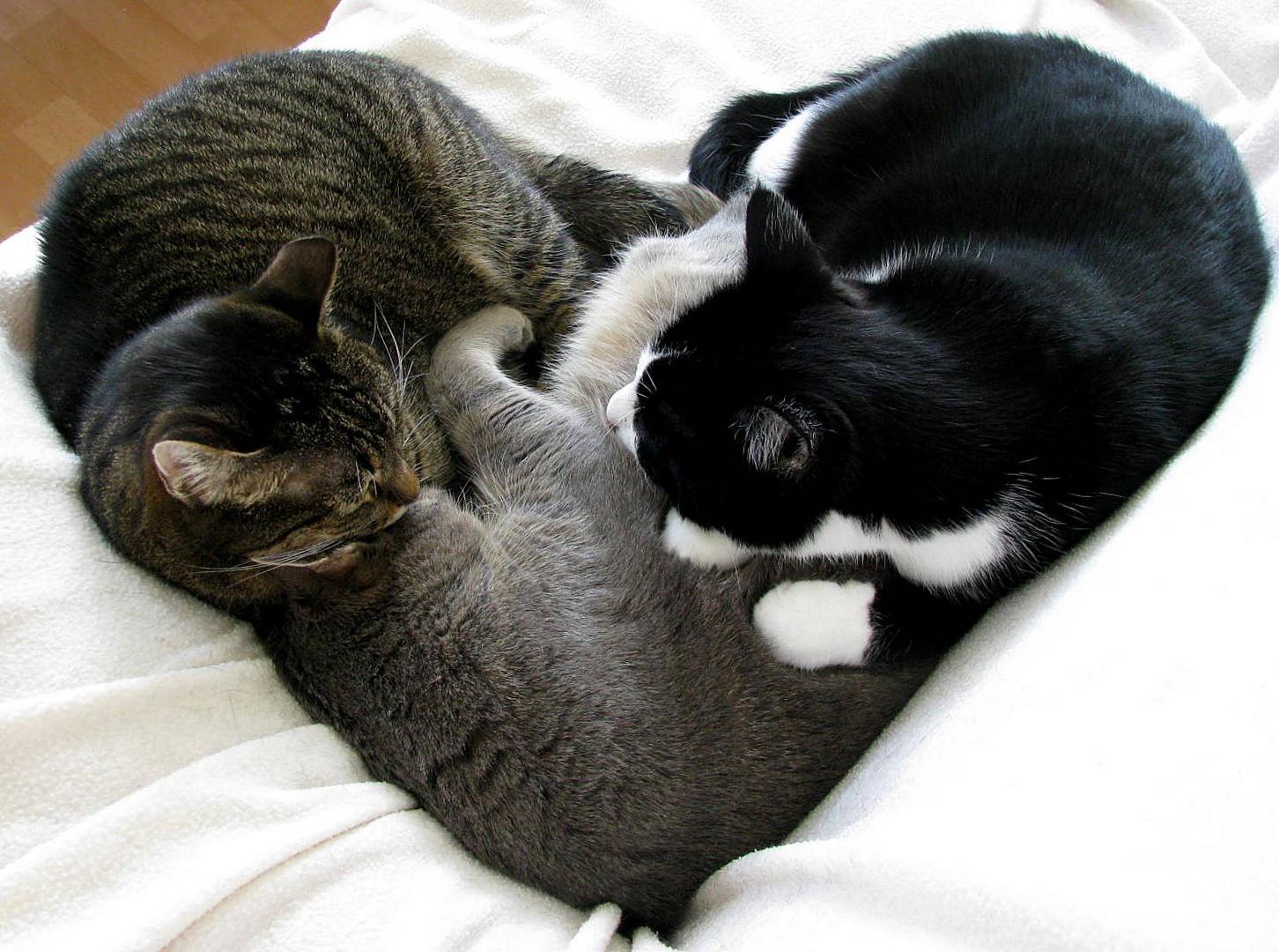 Ein Herz für Katzenfreunde