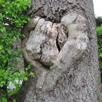 Ein Herzbaum