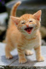 Ein herzliches Lachen