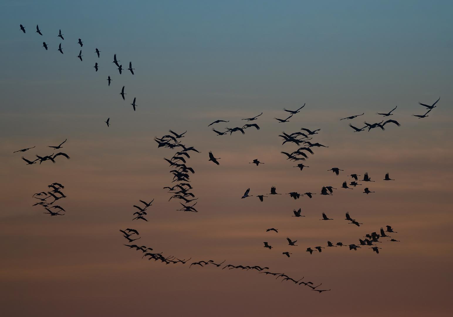 Ein Himmel voller Kraniche