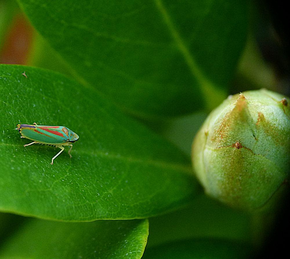 ein hübscher Schädling