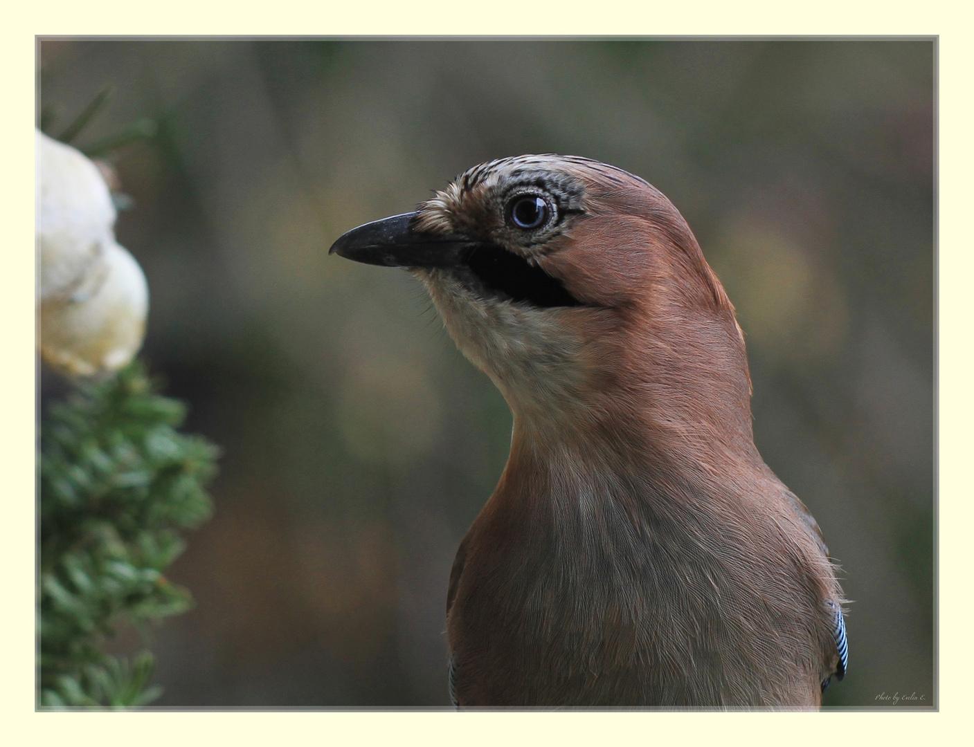 Ein hübscher Vogel