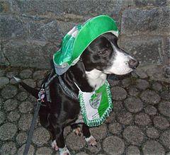 Ein Hund für Fußball