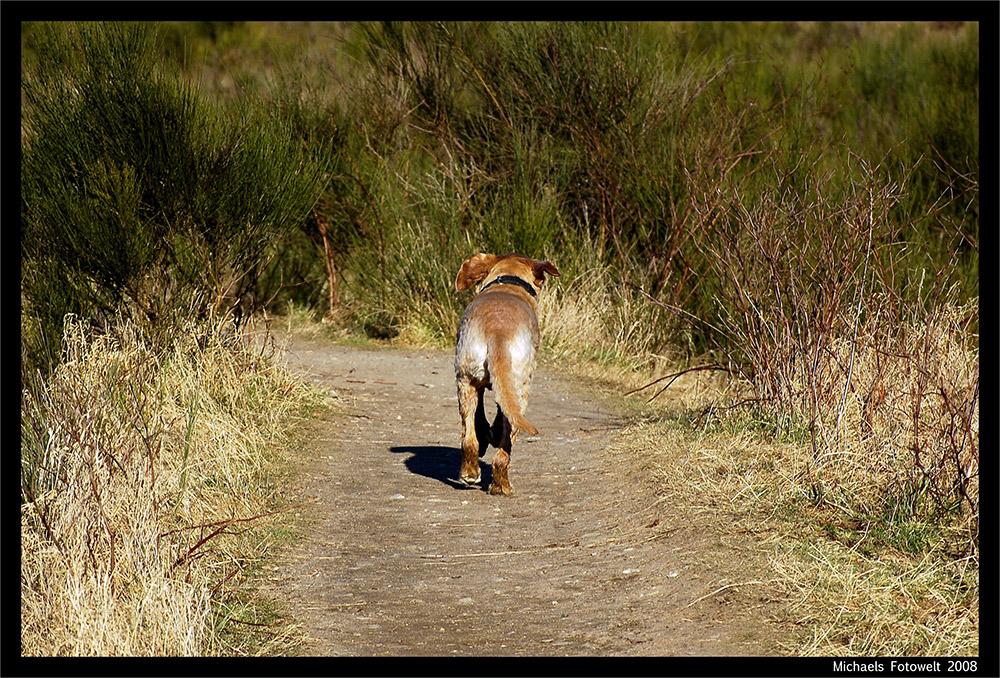 Ein Hund geht seinen Weg