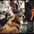 Ein Hund mit Baseballkappe