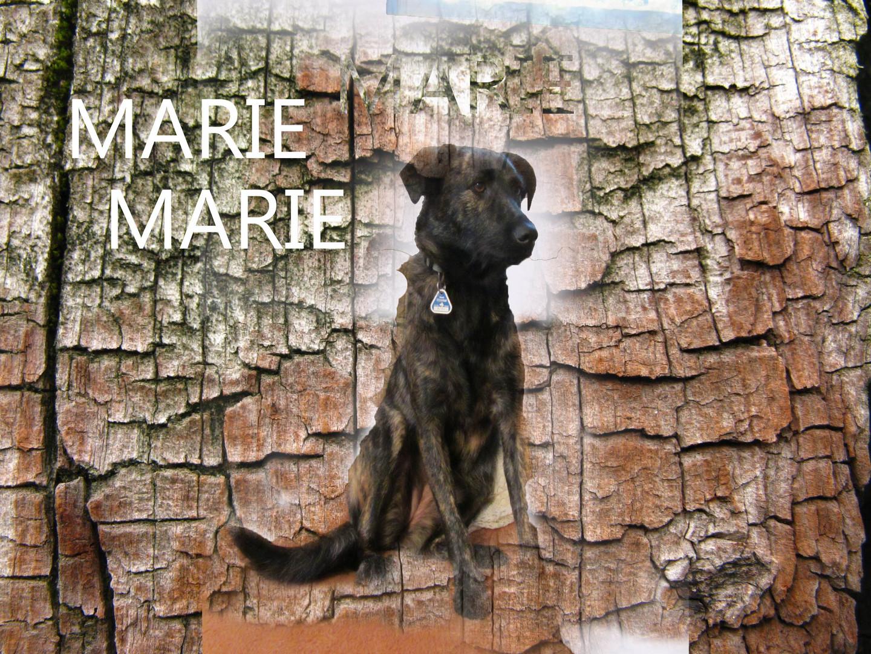 Ein Hund namens MARIE