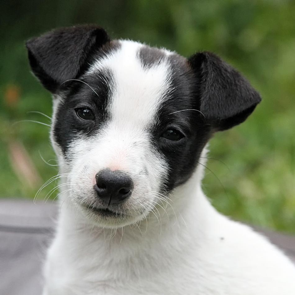 ein Hund zum Verlieben