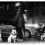 Ein Hundeleben 8: Warten auf Herrchen