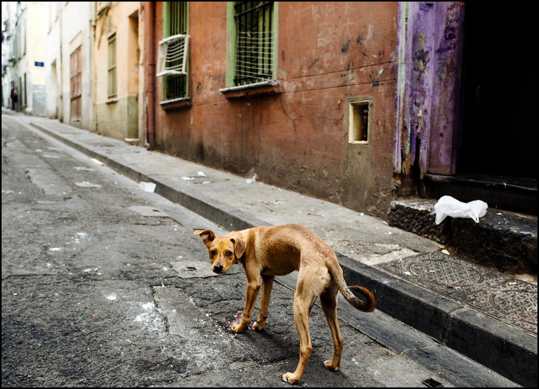 Ein Hundeleben